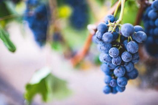 my-brussels-village-wine3